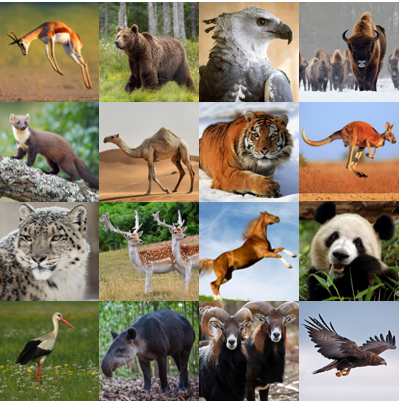 National Animals V Quiz - By palmtree